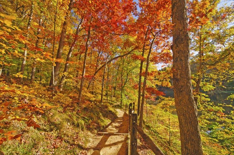 Trayectoria a través del bosque de la caída imagen de archivo libre de regalías
