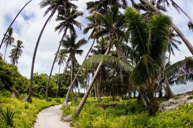 Trayectoria a través del bosque de las palmas de coco imagenes de archivo