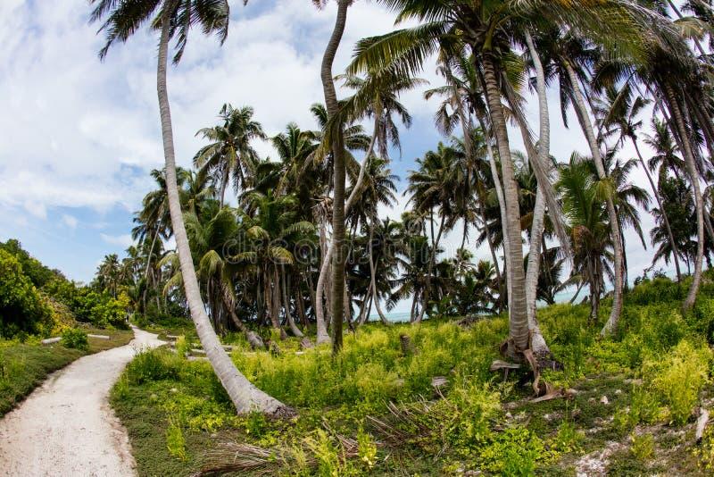 Trayectoria a través del bosque de las palmas de coco imagen de archivo libre de regalías