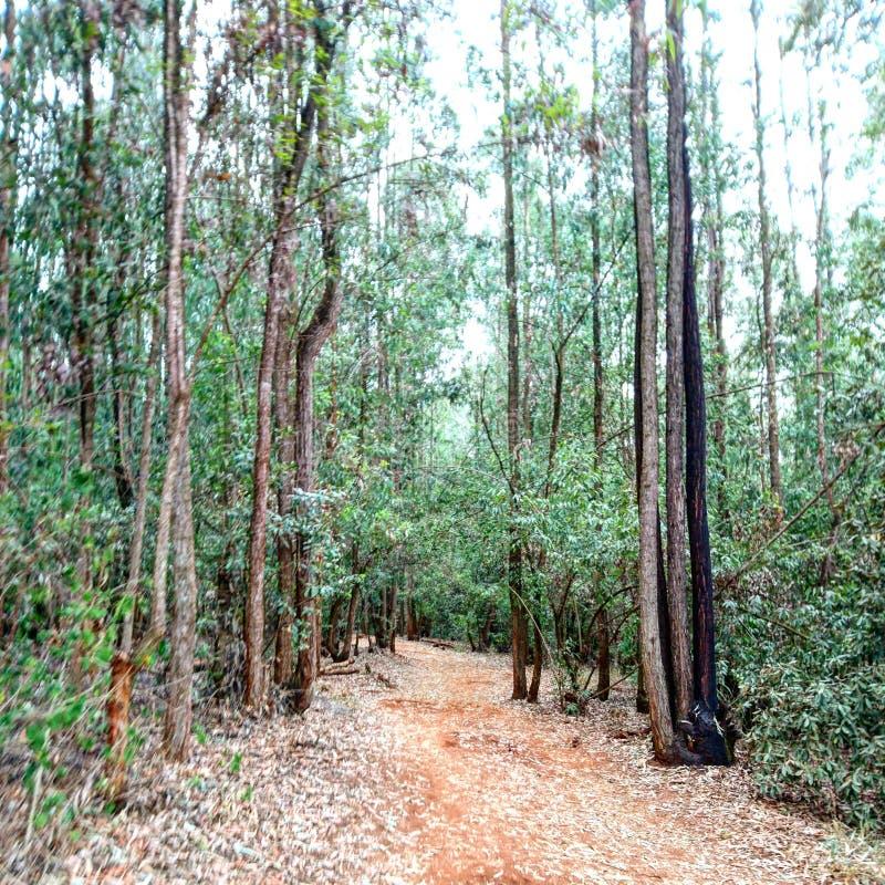Trayectoria a través del bosque durante un sendero foto de archivo libre de regalías
