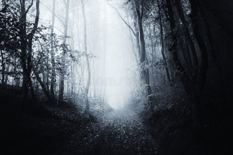 Trayectoria a través del bosque espeluznante frecuentado surrealista foto de archivo