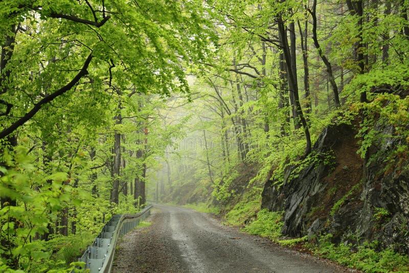 Trayectoria a trav?s del bosque de hojas caducas de la primavera brumosa imágenes de archivo libres de regalías