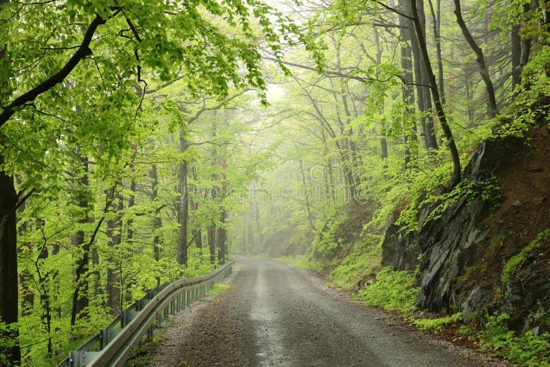 Trayectoria a trav?s del bosque de hojas caducas de la primavera brumosa imagen de archivo libre de regalías