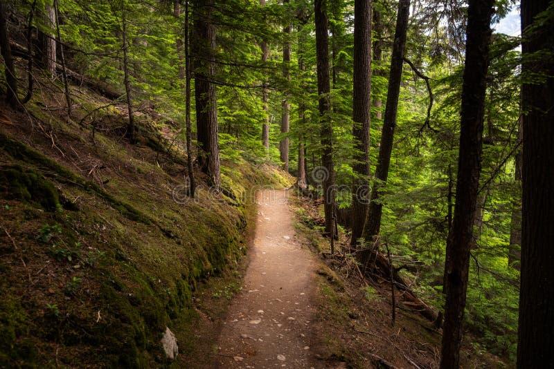 Trayectoria vacía a través de un bosque de la montaña en verano imagenes de archivo