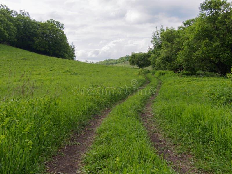 Trayectoria verde en el prado imágenes de archivo libres de regalías