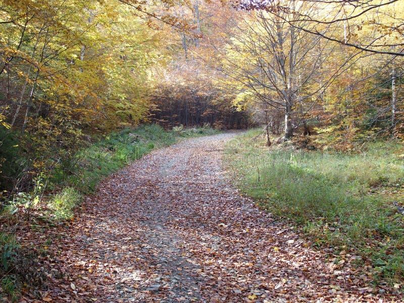 Trayectoria y árboles coloridos en bosque en caída fotografía de archivo