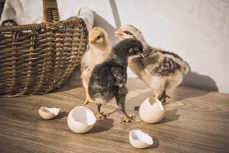 Tre äggskalstunna och vide- korg för fågelungar, på tabellen, tappning arkivfoto