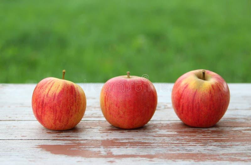 Tre äpplen på en wood tabell utomhus royaltyfria bilder