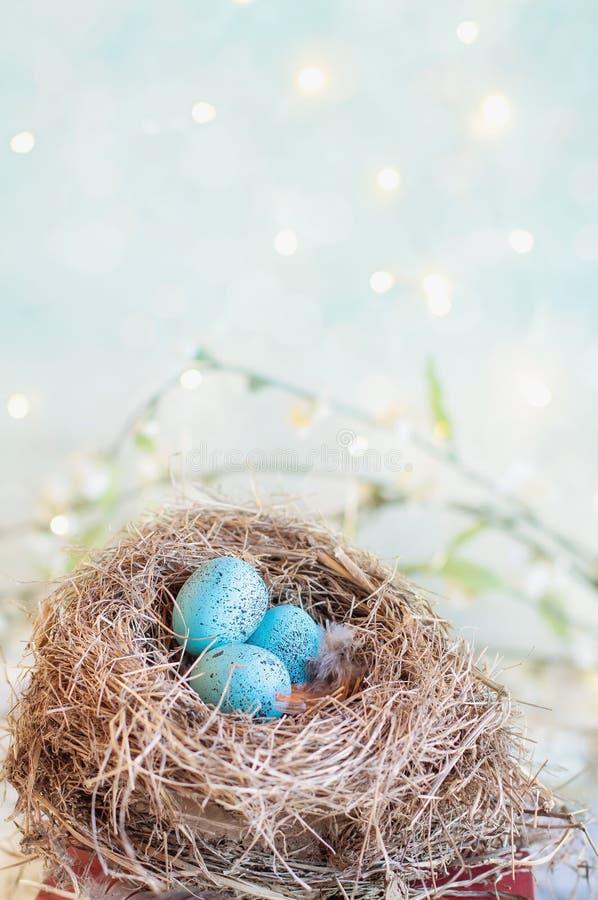 Tre öronmärkta blå ägg med Bokeh arkivfoton