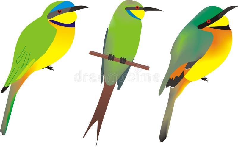 Tre afrikanska biätare vektor illustrationer