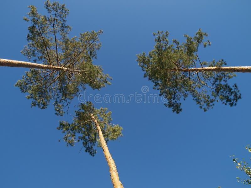 Tre alberi fotografie stock libere da diritti