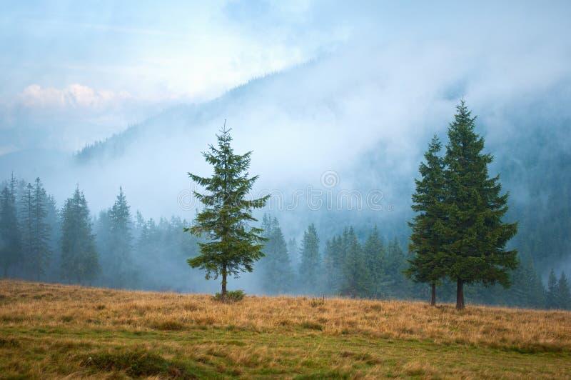 Tre alberi attillati su un pascolo immagine stock