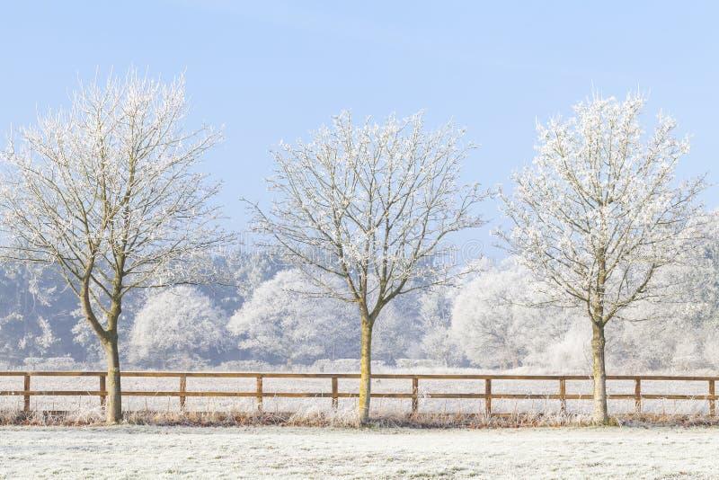 Tre alberi di inverno e recinto congelato immagini stock