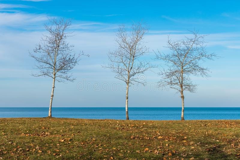 Tre alberi nudi lungo la riva del lago Michigan in Chicago fotografia stock libera da diritti