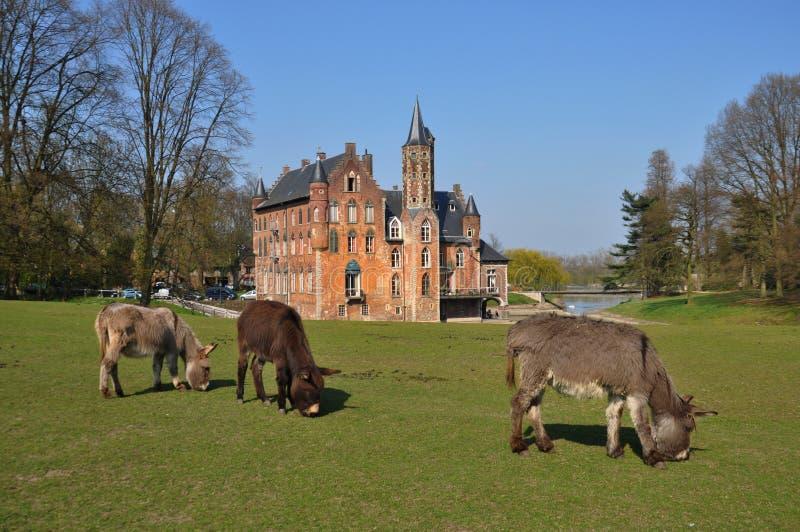 Tre asini che pascono in una parte anteriore del castello immagine stock