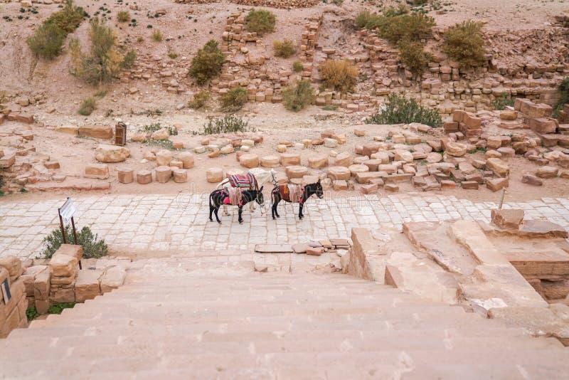 Tre asini vicino alle scale della pietra dello scavo di Brown University immagini stock libere da diritti
