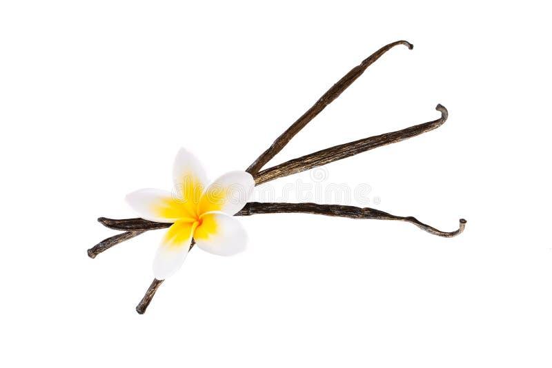 Tre baccelli della vaniglia con un fiore su bianco fotografia stock libera da diritti
