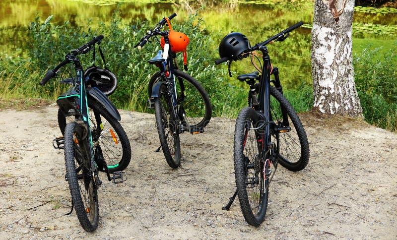 Tre biciclette per il riciclaggio della foresta parcheggiate fotografia stock libera da diritti