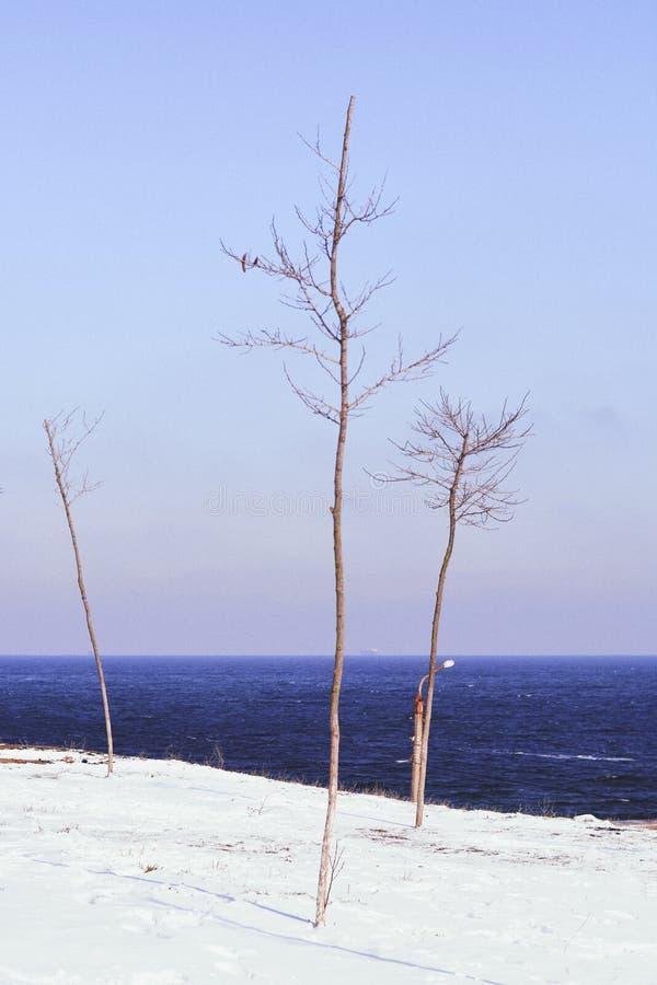 Tre brevi alberi asciutti senza foglie su una spiaggia sabbiosa con un mare blu scuro nei precedenti fotografie stock libere da diritti