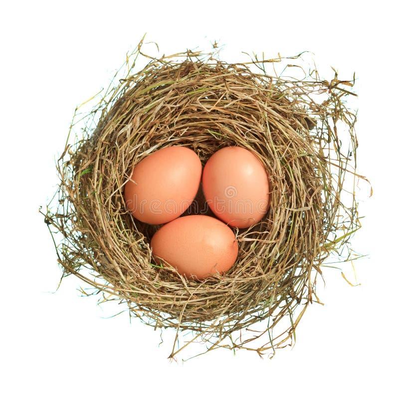 Tre bruna ägg i rede över vit royaltyfri bild