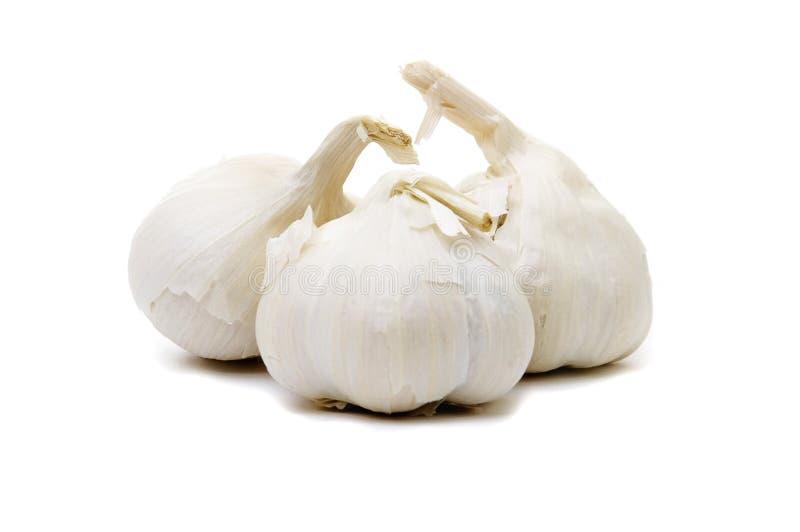 Tre bullbs dell'aglio su bianco immagine stock