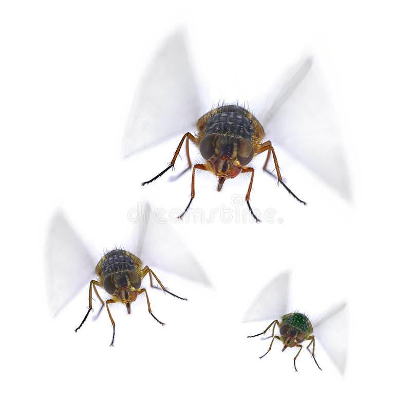 Tre Camera Flys immagine stock