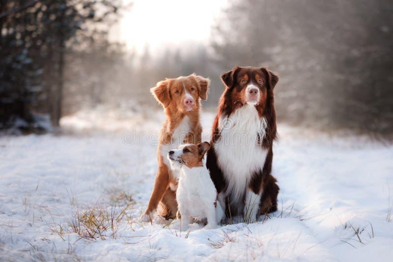 Tre cani che si siedono insieme all'aperto nella neve fotografia stock libera da diritti