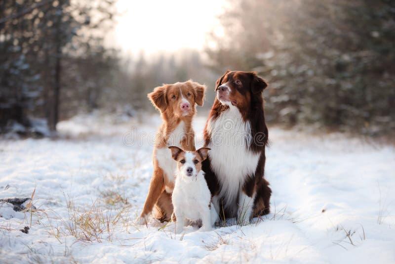Tre cani che si siedono insieme all'aperto nella neve immagine stock libera da diritti