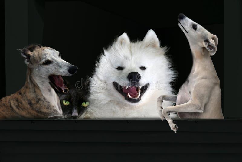 Tre cani di canto ed un gatto nascosto sul nero fotografia stock libera da diritti
