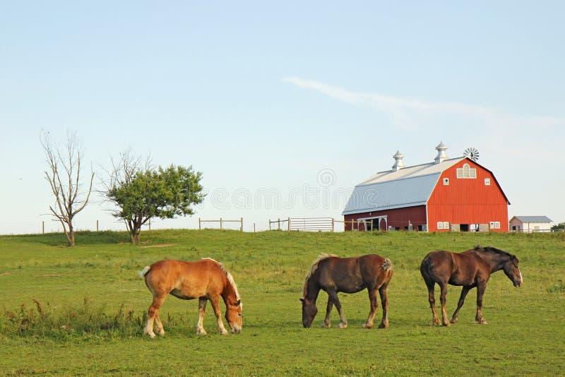 Tre cavalli e un granaio fotografie stock libere da diritti