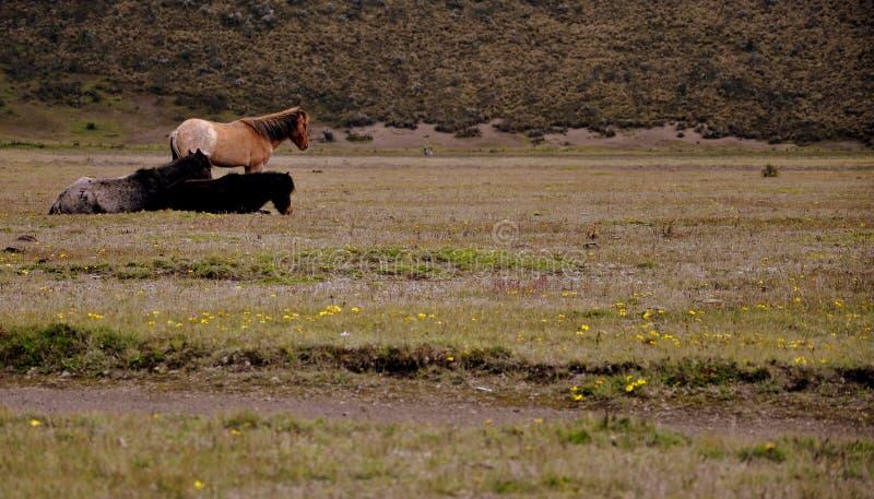 Tre cavalli fronteggiano una bella montagna fotografia stock
