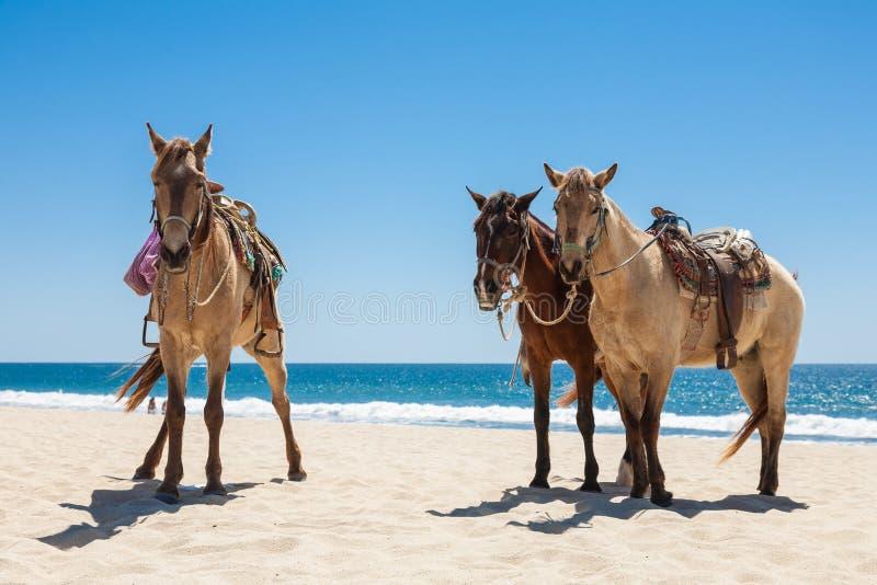 Tre cavalli su una spiaggia fotografie stock