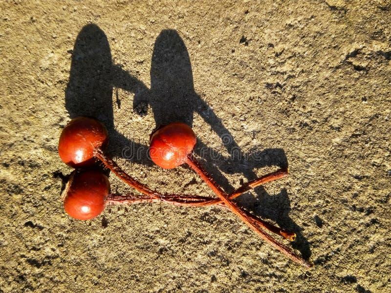 Tre cinorrodi asciutti rossi su calcestruzzo immagine stock