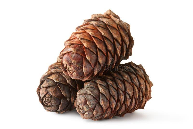 Tre coni di cedro siberiano (pino) immagine stock