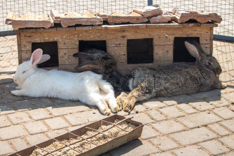 Tre conigli adorabili che dormono vicino alla depressione di alimentazione r Concetto degli animali domestici fotografie stock