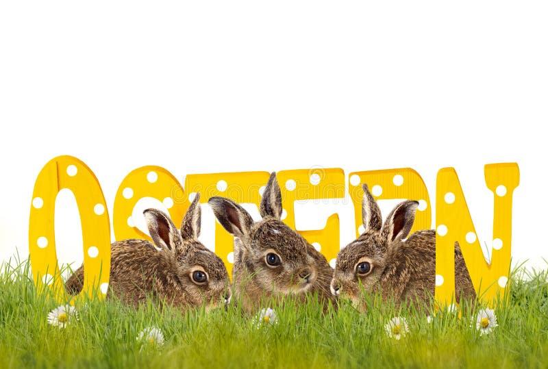 Tre coniglietti di pasqua che si siedono nel prato con le lettere di legno (Oste immagini stock libere da diritti