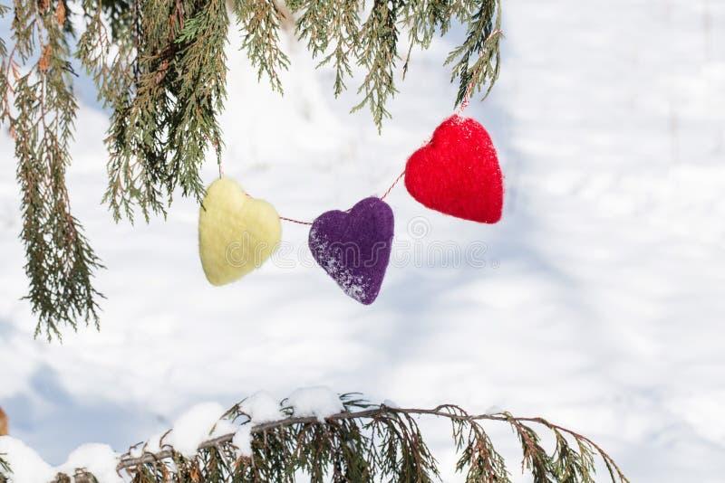 Tre cuori di amore di giorno di biglietti di S. Valentino che appendono in pino fotografia stock libera da diritti