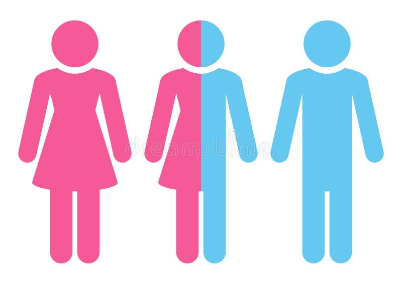Tre diagram kvinnligt diverse manligt rosa och blått vektor illustrationer