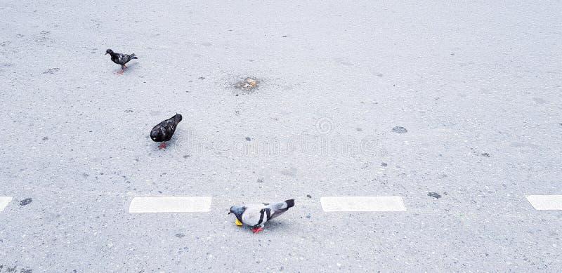 Tre duvor går på gatan arkivbilder