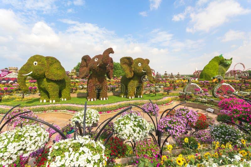 3 tre elefanter och 2 två katter som göras av blommor som välkomnar turister på ingången på mirakelträdgården i Dubai arkivbild