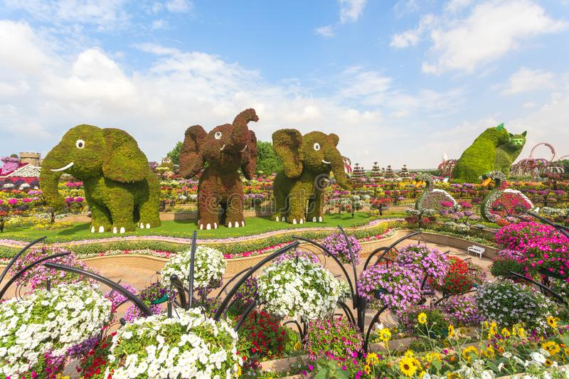 3 tre elefanti e 2 due gatti fatti dei fiori che accolgono favorevolmente i turisti all'entrata al giardino di miracolo nel Dubai fotografia stock