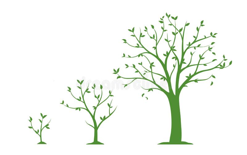Tre etapper av det växande trädet - plan vektorillustration stock illustrationer