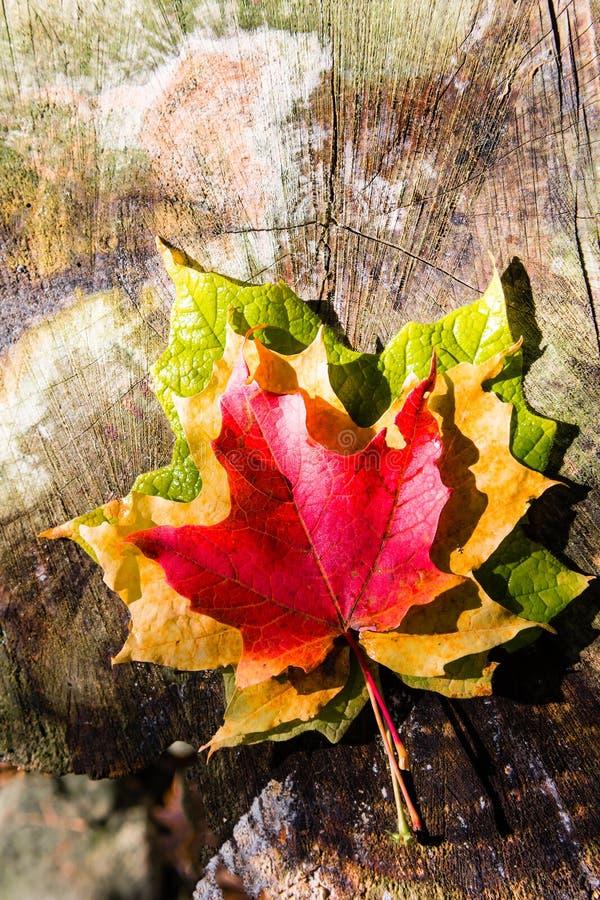 Tre färger av hösten royaltyfri fotografi