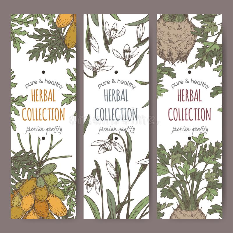 Tre färgetiketter med apiumgraveolensaka selleri, carica den papayaaka papayaen, Galanthus nivalisaka snödroppe skissar vektor illustrationer