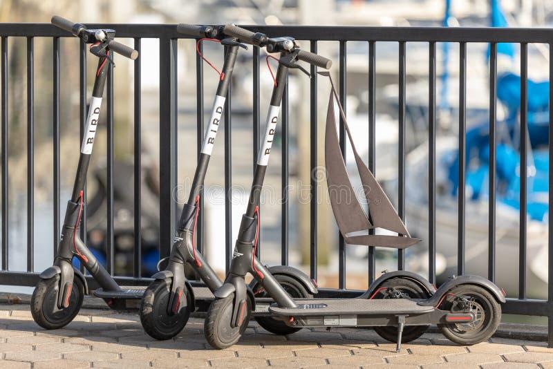 Tre FÅGELsparkcyklar på en sikt för låg vinkel för trottoar arkivbild