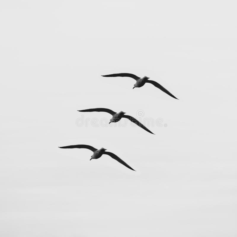 Tre fåglar i himlen arkivfoton