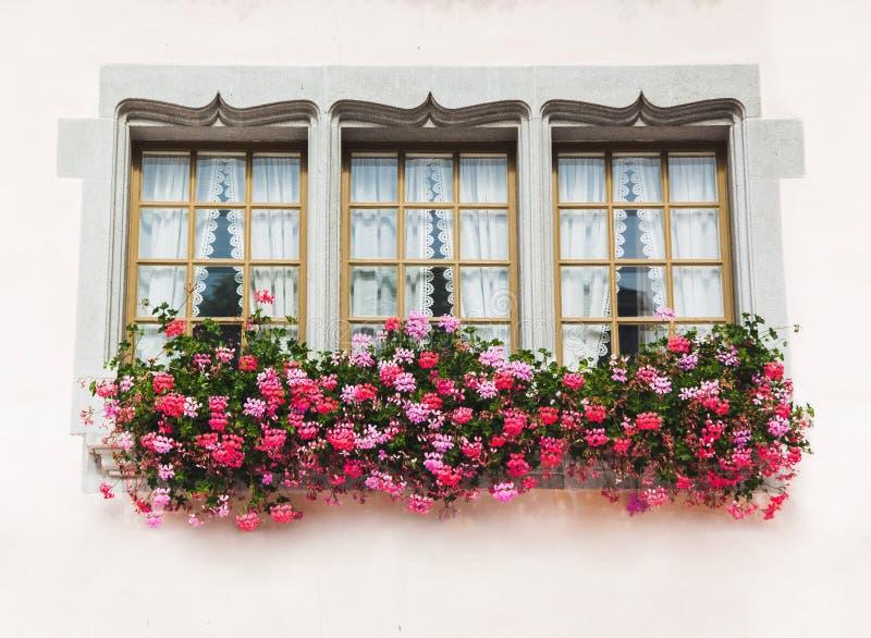 Tre fönster i gammalt hus med rosa blommor royaltyfri bild