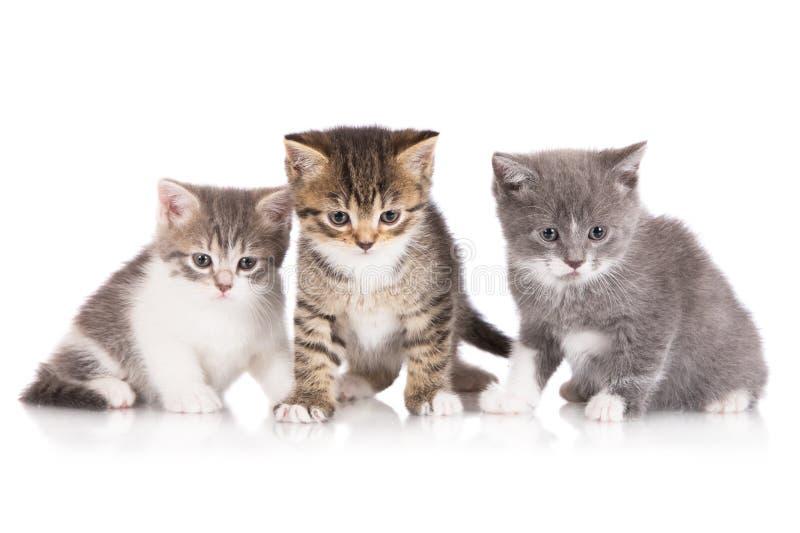 Tre förtjusande kattungar arkivbild
