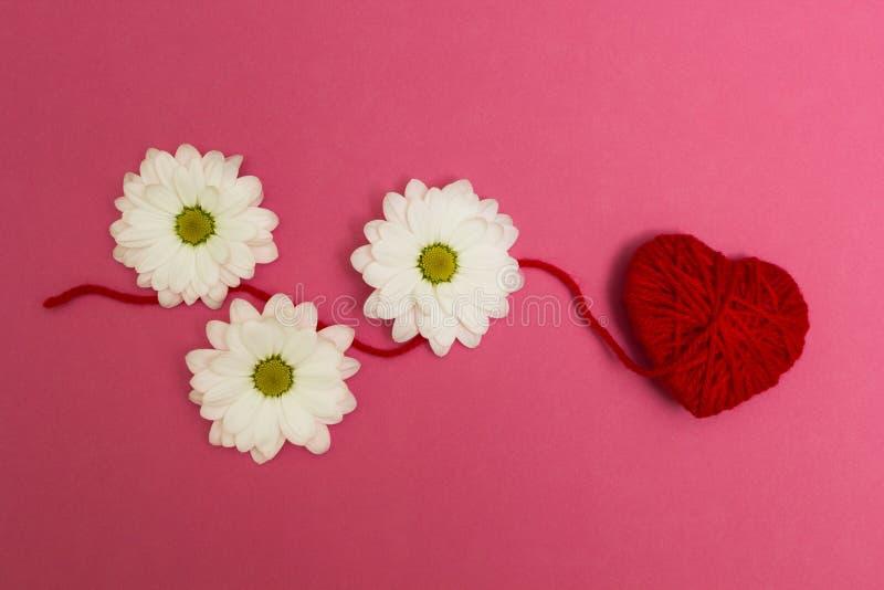 Tre fiori bianchi e un cuore rosso su un fondo rosa fotografia stock