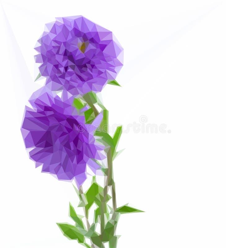 Tre fiori del lillà dell'aster illustrazione di stock